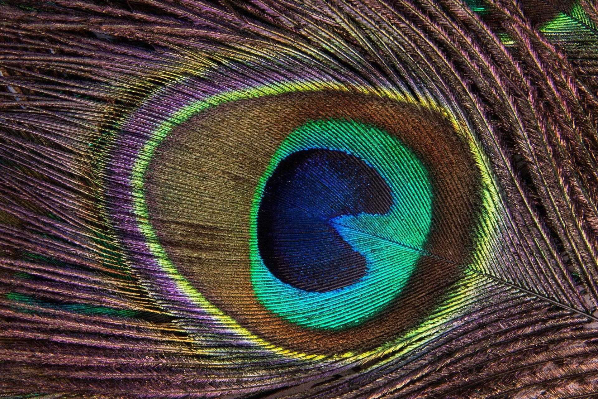 peacock feather 186339 1920 - Le Mauvais Oeil