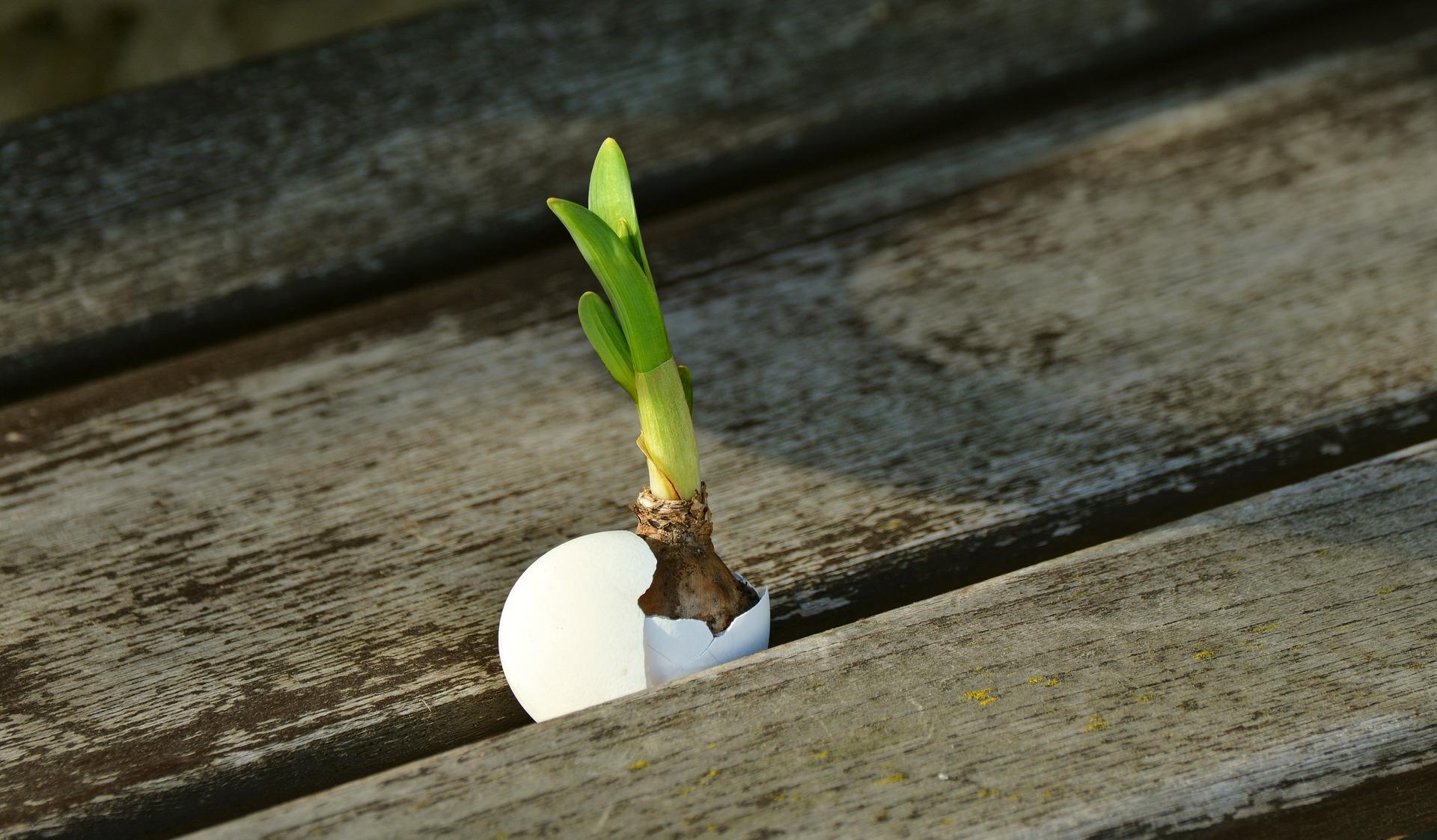 onion 2013174 1920 - Tout est dans l'oeuf - Divination kaoticienne pratique