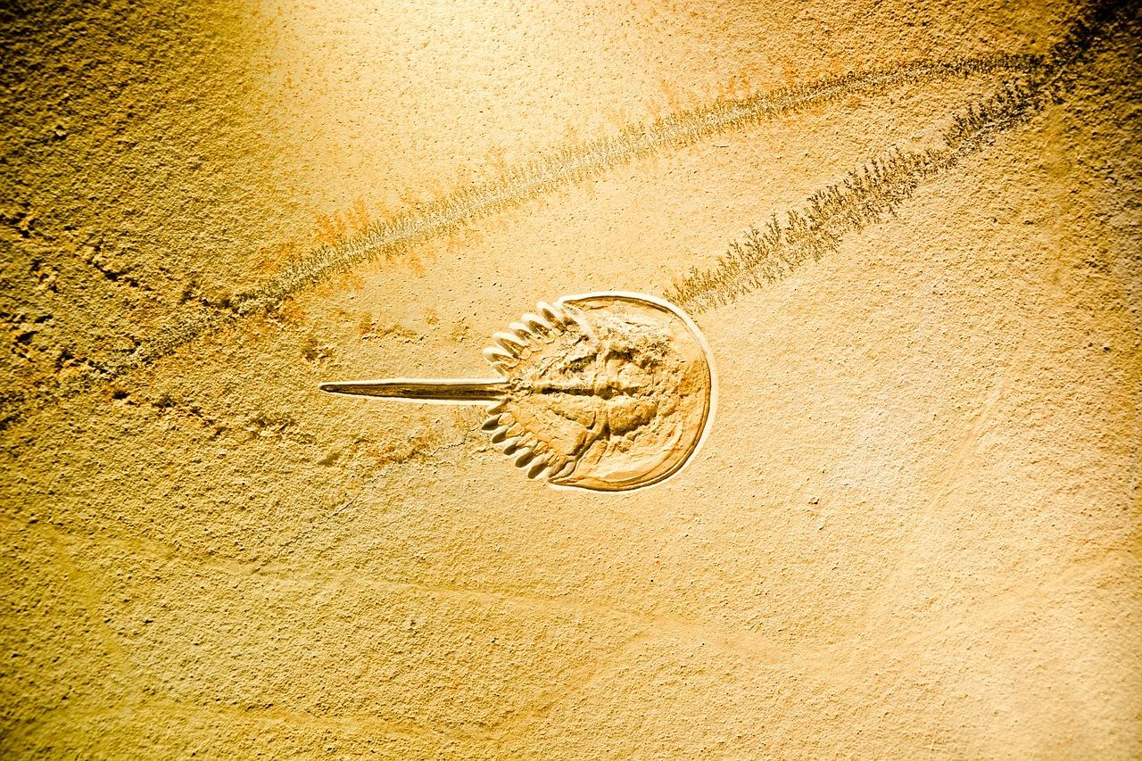 Paléolithisme & Technologie
