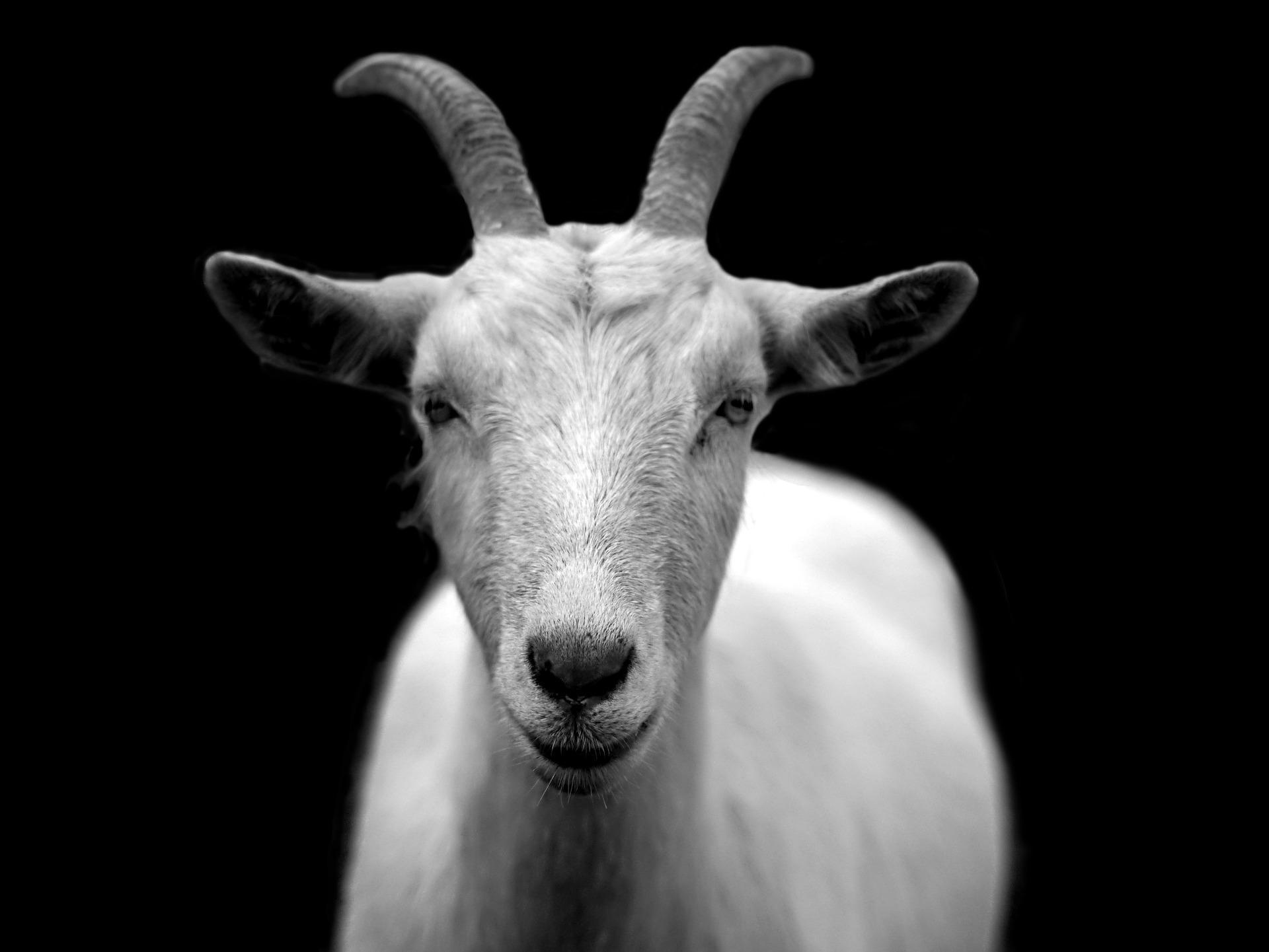 goat 50290 1920 - Une mise en garde à tous ceux qui voudraient devenir des magiciens blancs