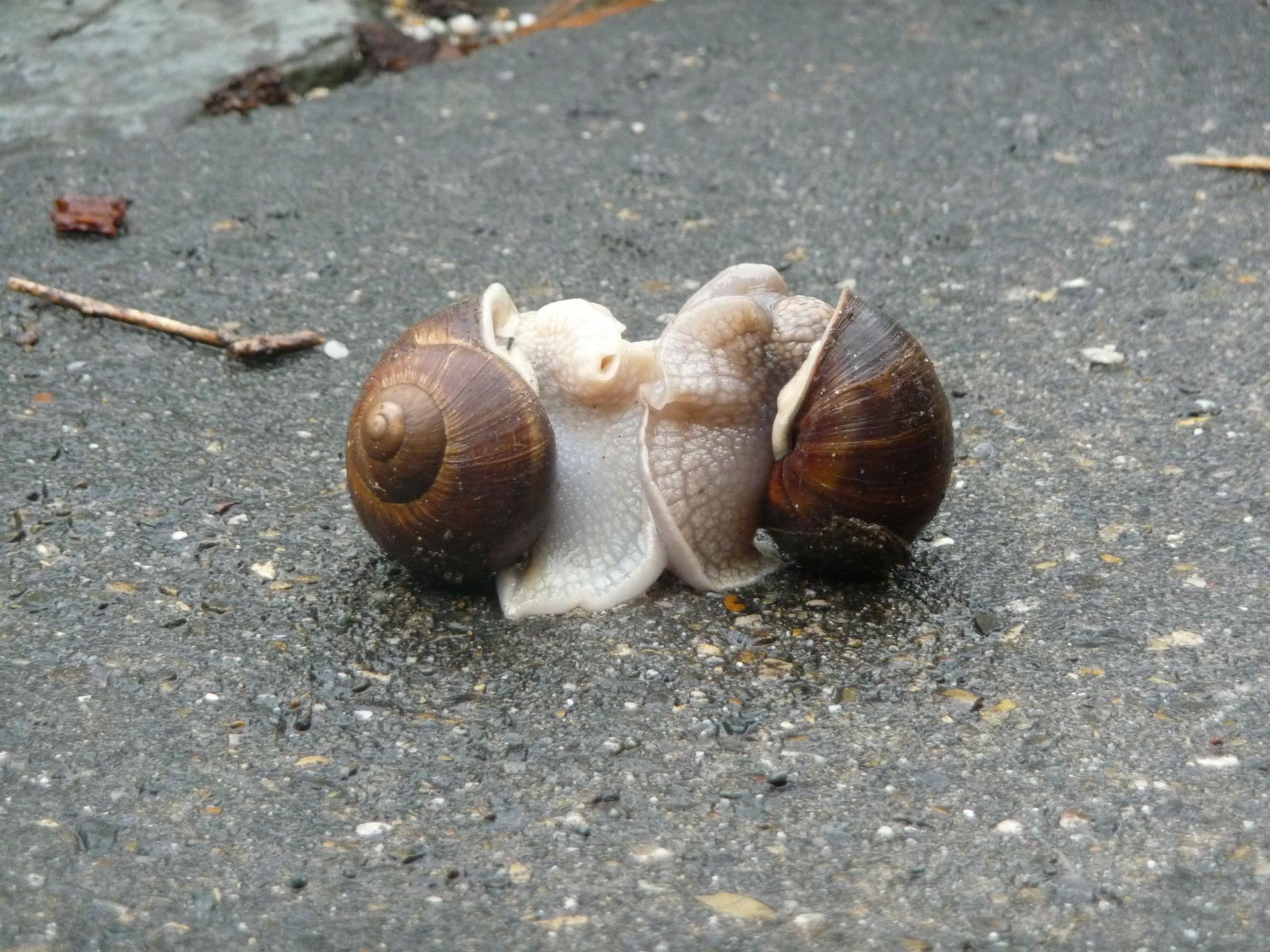 escargots 243303 1920 - Galipettes Cthulhoïdes