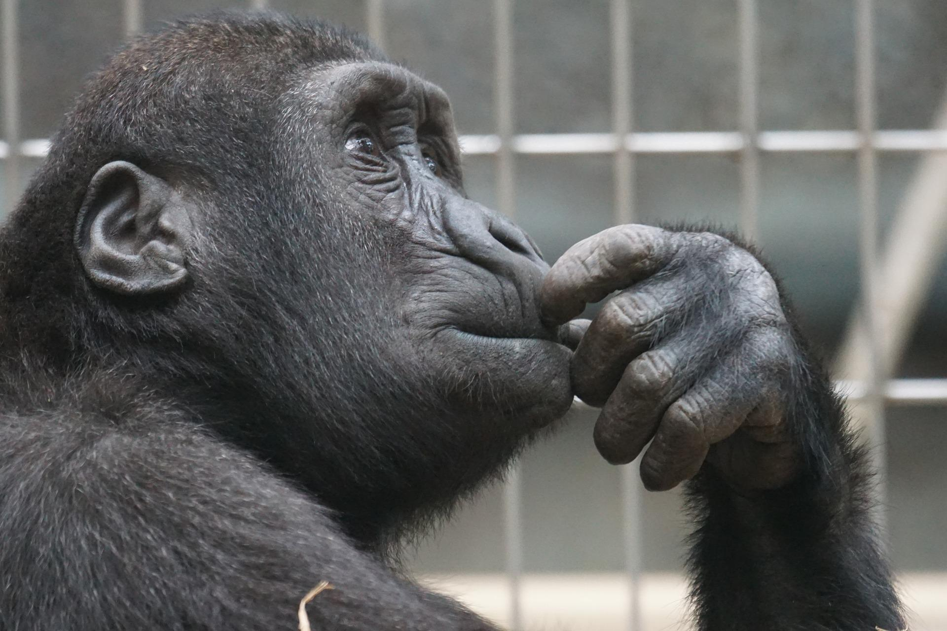 primate 1019101 1920 - Une Conclusion, c'est quand tu arrêtes de penser