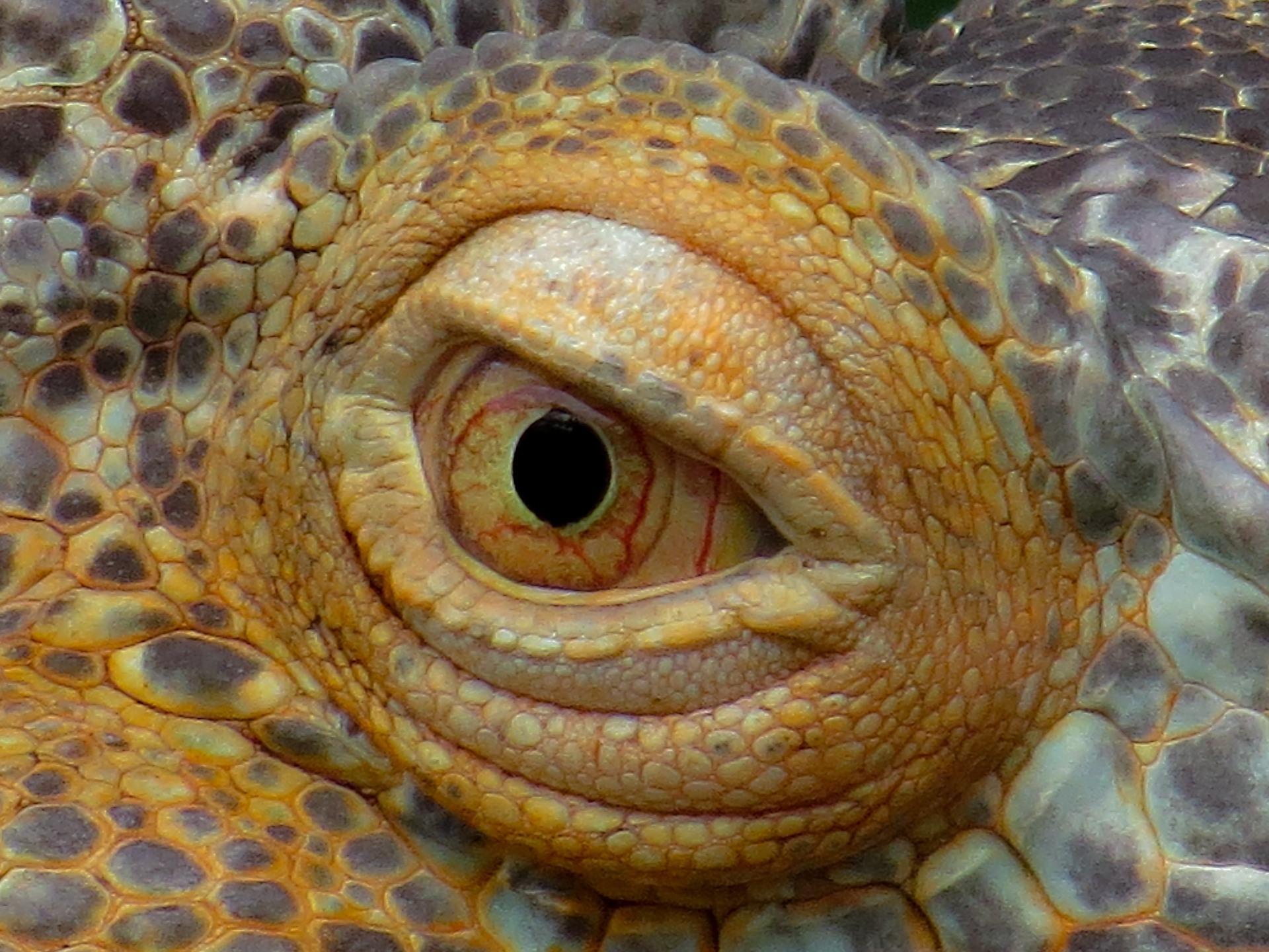 eye 854340 1920 - Le Dragon aveugle